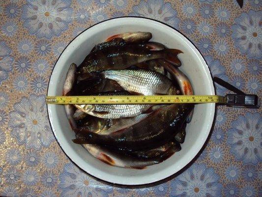 post-1502-0-54137600-1414422102_thumb.jp