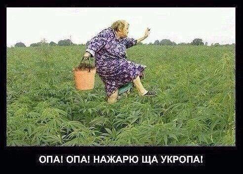 Матвеевна и бля уродилась конопля польза от марихуаны видео