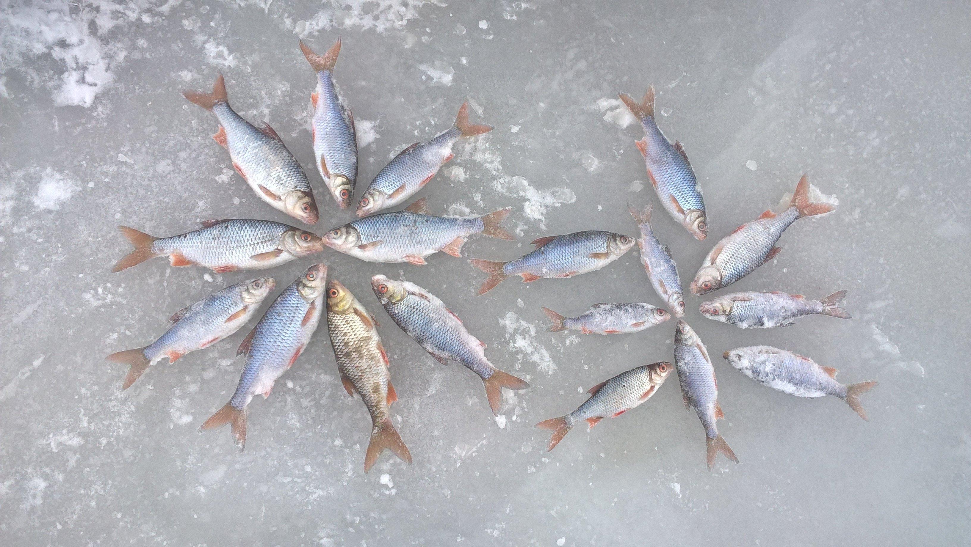 Зимняя рыбалка на озере ильмень