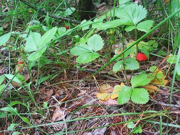 Первые грибы 006.jpg