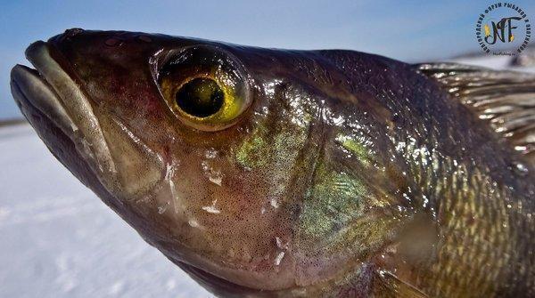 зима рыба  (25 of 1).jpg