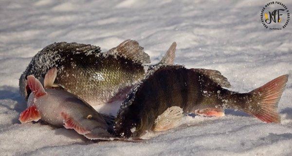 зима рыба  (29 of 1).jpg