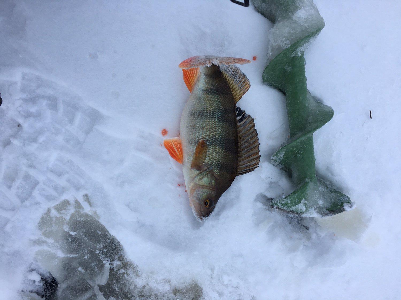 Зимния рыбалка форум отчеты о рыбалке