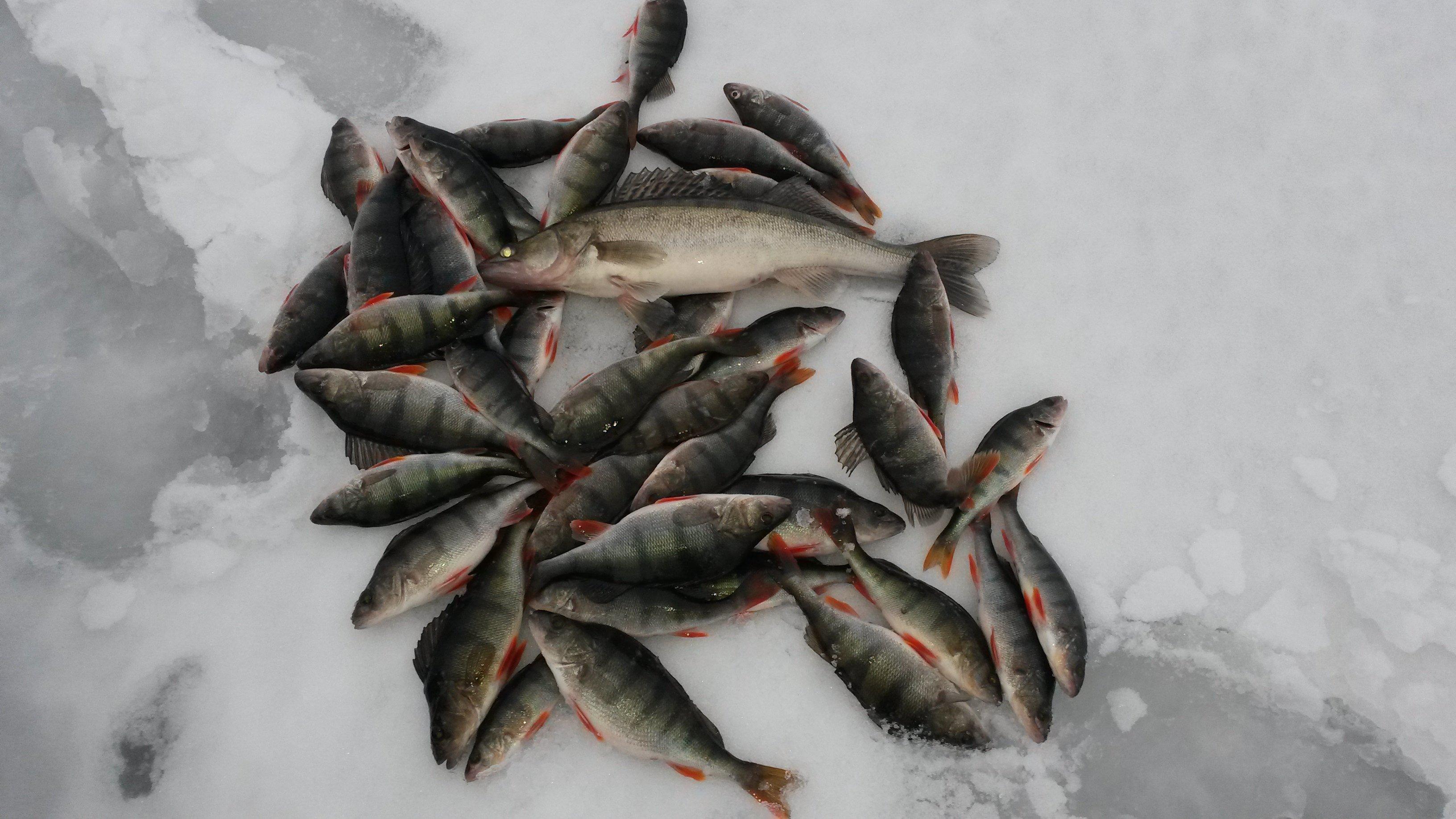 Форум о рыбалке е1
