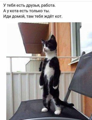 Кот ждёт.jpg