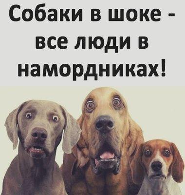 собаки в шоке.jpg