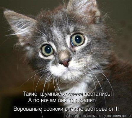 Кот о сосисках.jpg