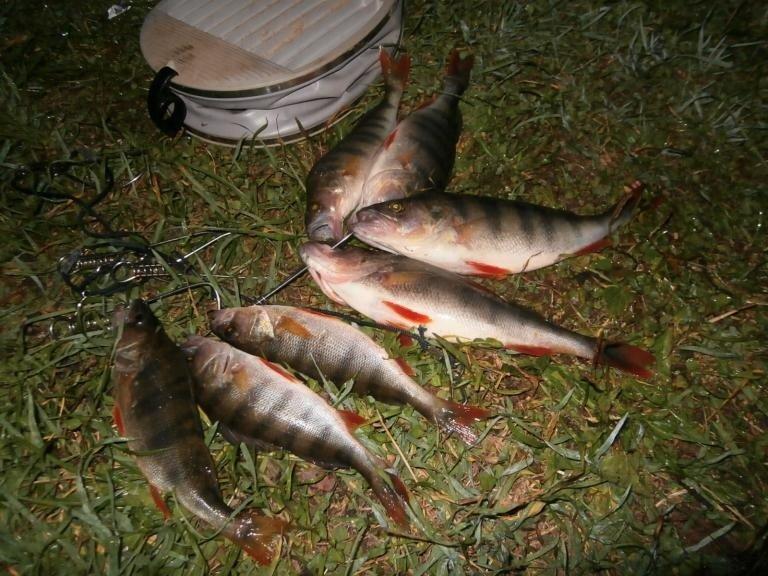 рыбалка в новгородской об