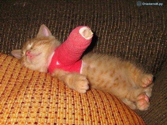 Что делать когда котенок заболел