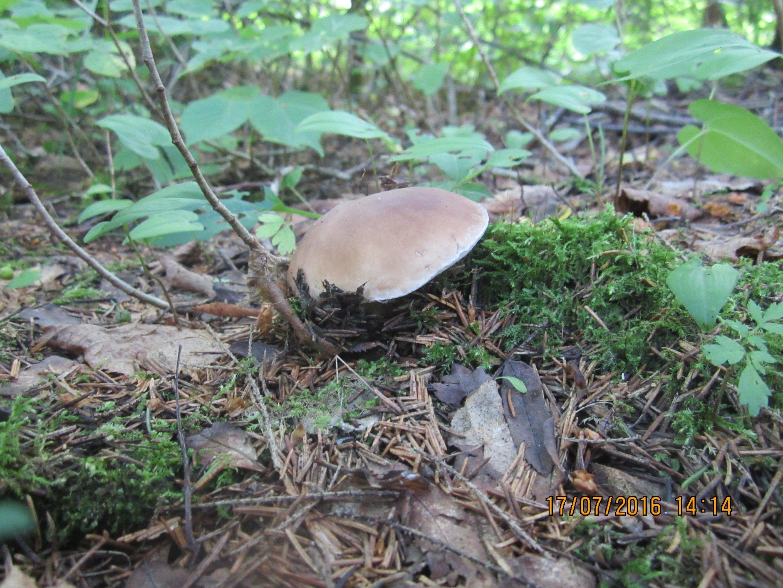 К чему беременной снится грибы 6